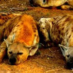 4 Day Kruger & Panorama Tour
