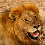 8 Day Family Safari