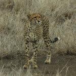 9 Day Kruger Safari