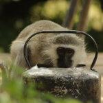 10 Day Kruger Safari