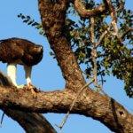 10 Day Kruger Safari - Skukuza Rest Camp