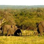 Elephant Herd - Zimbabwe Safari