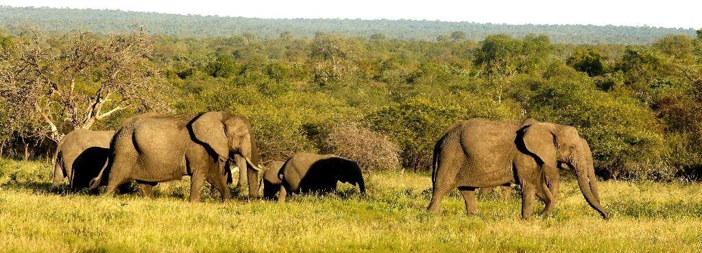 Kruger Safari - Elephant Herd