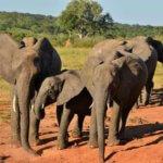 Elephants - 6 Day Luxury Zimbabwe Safari