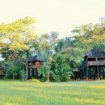 Ivory Lodge Accommodation - 6 Day Luxury Zimbabwe Safari
