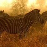 10 Day Kruger Safari - Punda Maria Rest Camp