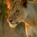7-Day Ultimate Kruger Non Fenced Walking Camping Safari