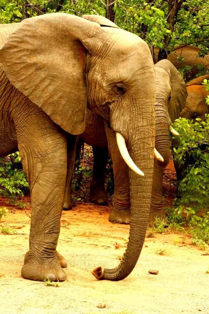 12 day photographic safari