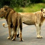 8 Day Kruger Safari