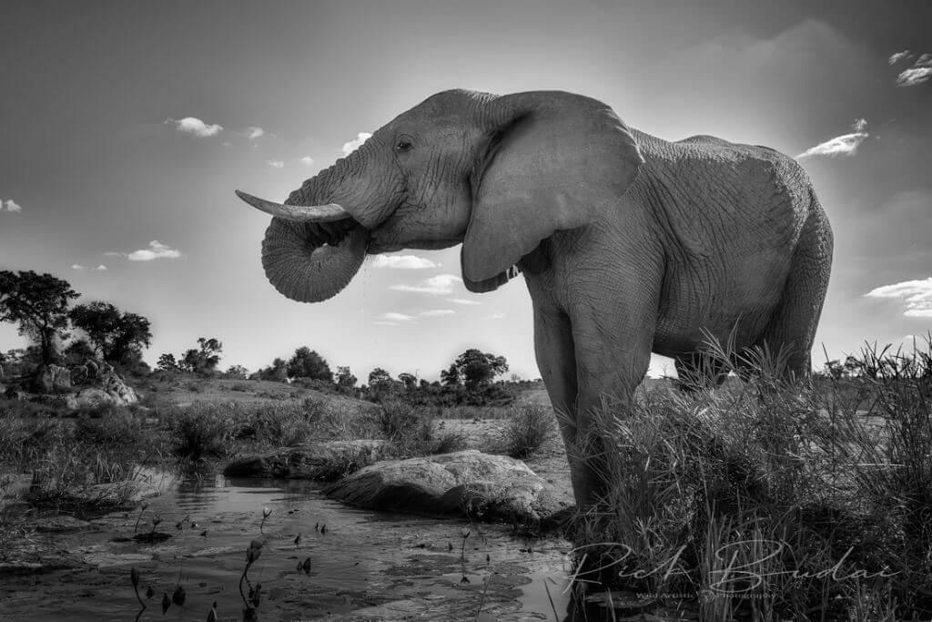Kruger Photographic Safari