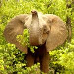 6 Day Family Safari