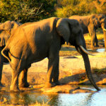 5 Day Kruger Safari South