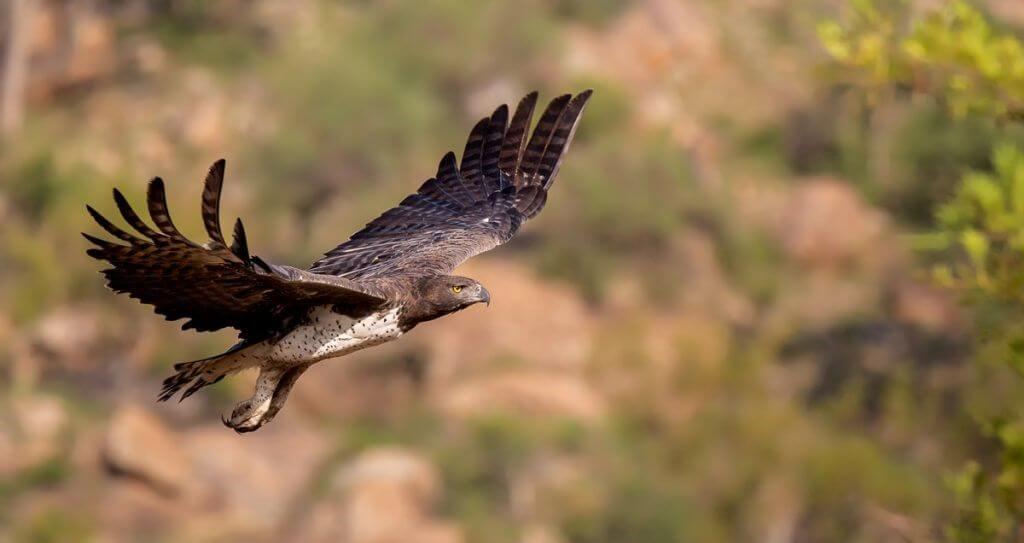 Bird in flight, Bird Photography
