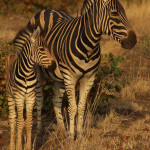 3 Day Kruger Safari