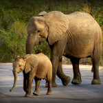 4 Day Kruger and Panorama Family Tour
