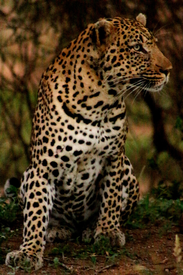 11 Day Kruger Safari