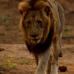 8 Day Kruger Safari