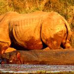 14 Day Family Safari