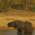 7 Day Kruger Safari