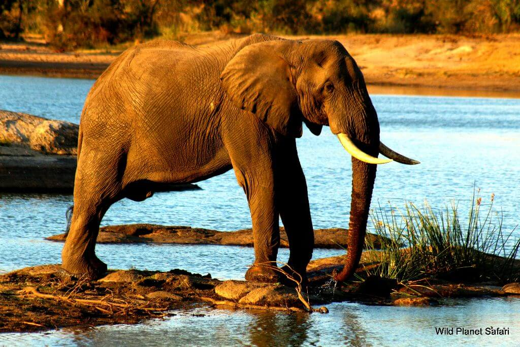 12 Day Kruger, Swaziland and Beach Tour
