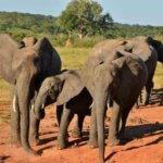 Elephants - 6 Day Luxury Zimbabwe Safari