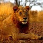 12 Day Photographic Safari