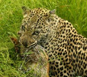 Kruger Budget Safari