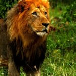 9 Day Kruger Safari