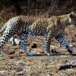 10 Day Kruger Safari