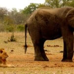 7-Day Ultimate Kruger Non Fenced Walking Camping Safari