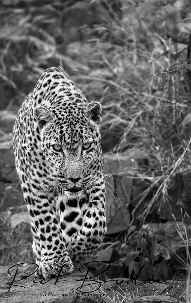 Kruger Photographic Safari