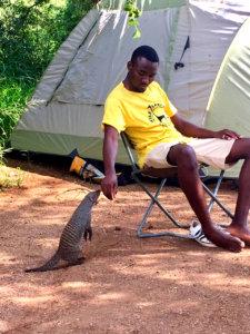 Kruger Campsite visitor