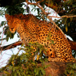 5 Day Kruger Safari South