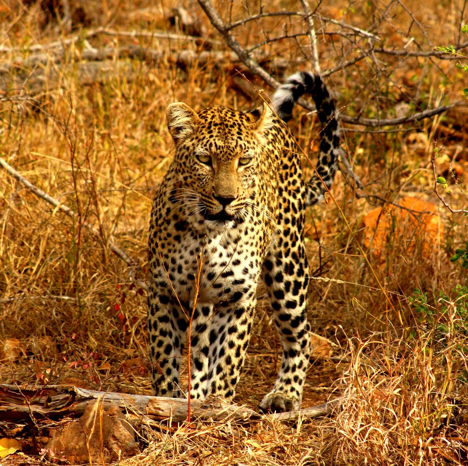 Makalali Walking Safari