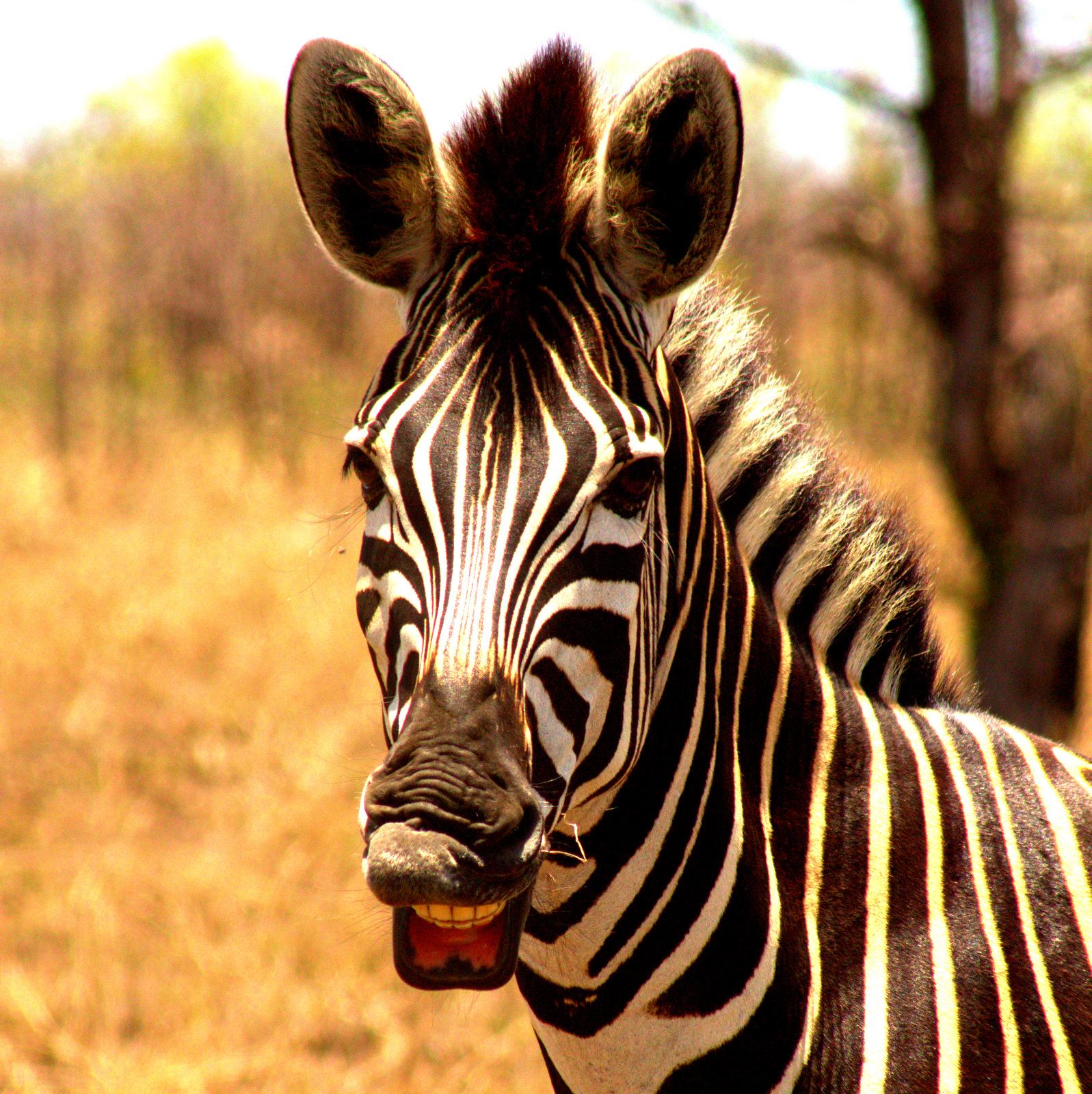 3 Day Kruger Safari