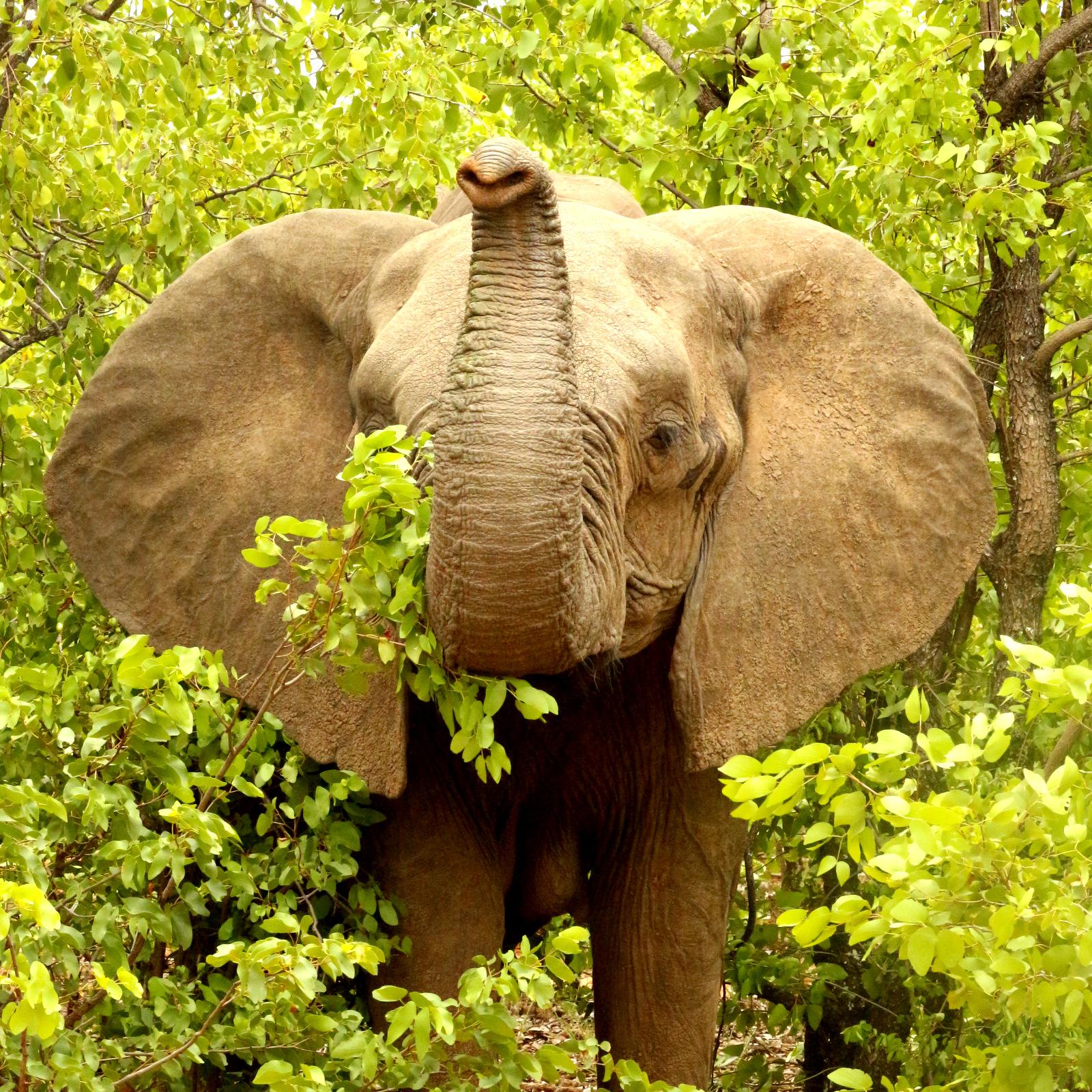Wild Planet Safari