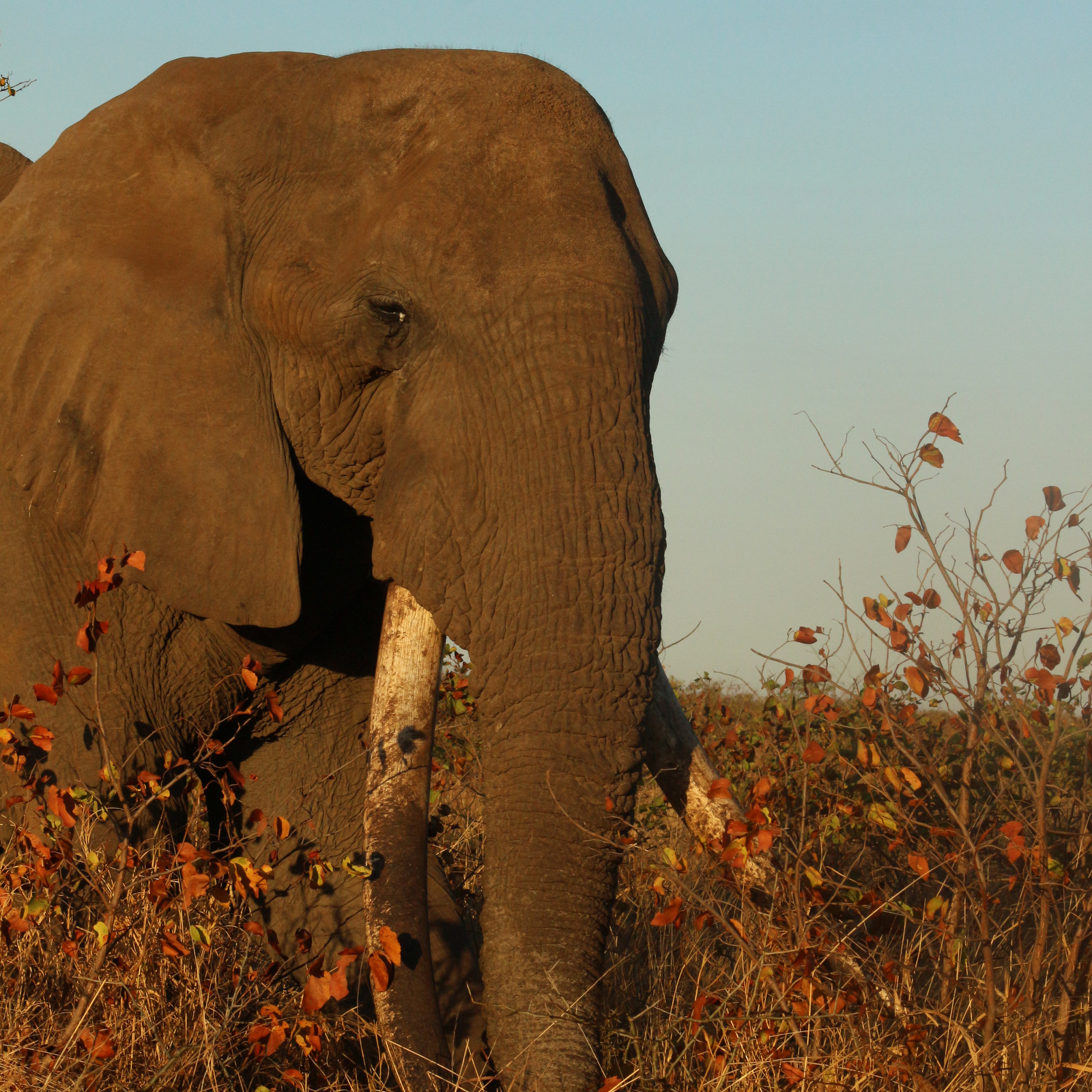 Elephant spotted on 4 Day Kruger Budget Safari
