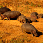 6 Day Kruger Safari