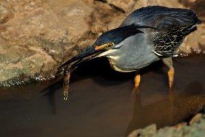 Bird Portrait, Bird Photography