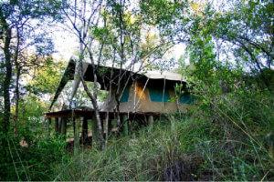 Walking Safari - Tented Camp